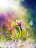 Wild purple flower under the sun beam — Stock Photo