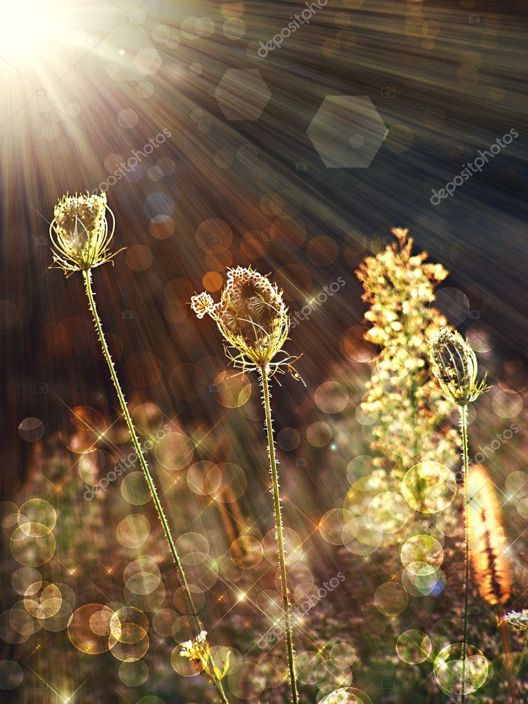 Wild flower under the summer sunshine   Stock Photo #4190692