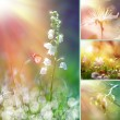 Stock Photo: Spring flower collage
