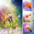 Summer flower collage — Stock Photo