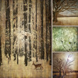 Specific photo collage of winter — Stockfoto