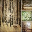 Specific photo collage of winter — 图库照片