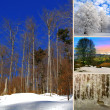 Specific photo collage of winter — Stock Photo