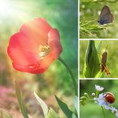 Frühling-blumen-collage — Stockfoto