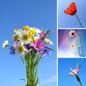 Collage de flores de verano — Foto de Stock