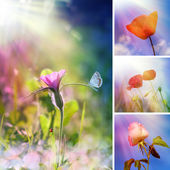 Sommer-blume-collage — Stockfoto