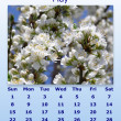 May month 2011 calendar — Stock Photo