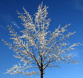 Treetop in Winter — Stock Photo