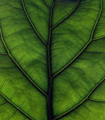 Leaf in Detail — Stock Photo