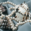 Three cockleshells and beads from natural sea pearls — Stock Photo #4277121