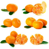 Mandarins collection — Stock Photo
