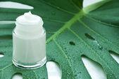 Cream on a leaf — Stock Photo