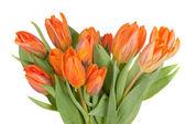 Tulips — Stok fotoğraf