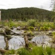 Stock Photo: Bog on city suburb