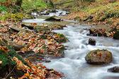 Jesienią rzeka — Zdjęcie stockowe