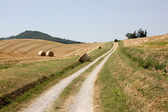 Fields of Emilia-Romagna — Foto Stock