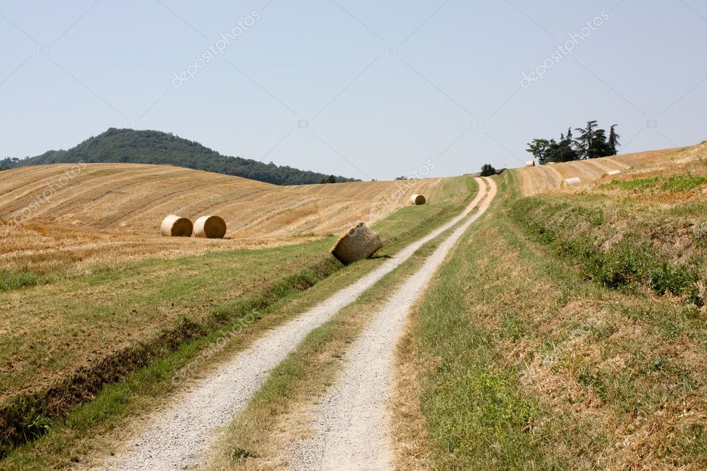 Agricultural fields from Emilia-Romagna, Italy — Stock Photo #4168856