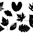 Leaves — Grafika wektorowa