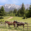 Foto de Stock  : Two horses in mountain landscape