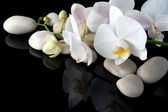 Orchid and stones — Stock Photo