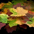 Stock Photo: Chestnut and autumn leafs