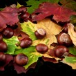 Chestnut and autumn leafs — Stock Photo