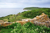 Bornholm island landscape with old wall — Stock fotografie