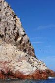 Aves em paracas ilha peru — Fotografia Stock