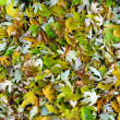 Green and white leafs on ground — Stock Photo