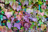 Autumn colorful leafs — Stock Photo