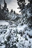 Winter park landscape — Stock Photo