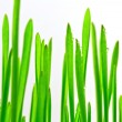 Green grass on white background — Stock Photo