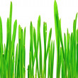 Stock Photo: Fresh green grass on white background