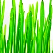 Close up pf green grass — Stock Photo
