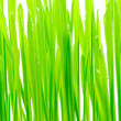 Stock Photo: Fresh green grass