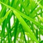 Fresh green grass — Stock Photo