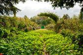 Il giardino di Monet — Foto Stock