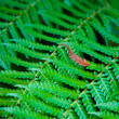 Fern — Stock Photo #4172890