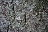 Standing stone detail — Stock Photo