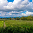 Vineyard and sky — Stock Photo #4248251