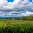 Vineyard and sky — Stock Photo
