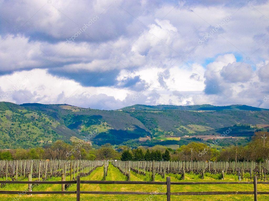 加利福尼亚州葡萄园