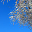 Sun sparkled the tree branch in ice on a blue sky background — Stock Photo #4572383