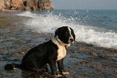 Mediterranean dog — Stock Photo