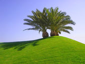 Palm trees on green grass — Stock Photo