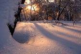 Beautiful colors of winter sunset with trees in the snow — Stock Photo