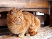 Yellow tabby cat looks aside in winter — Stock Photo