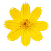 Beautiful yellow flower — Stock Photo