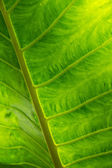 Details in green leaf — Stock Photo