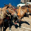 Donkeys on Santorini — Stock Photo
